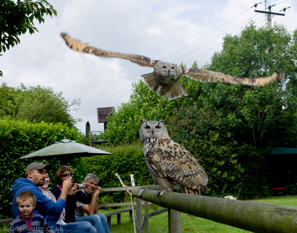 Owls at the new forest raptor and reptile centre